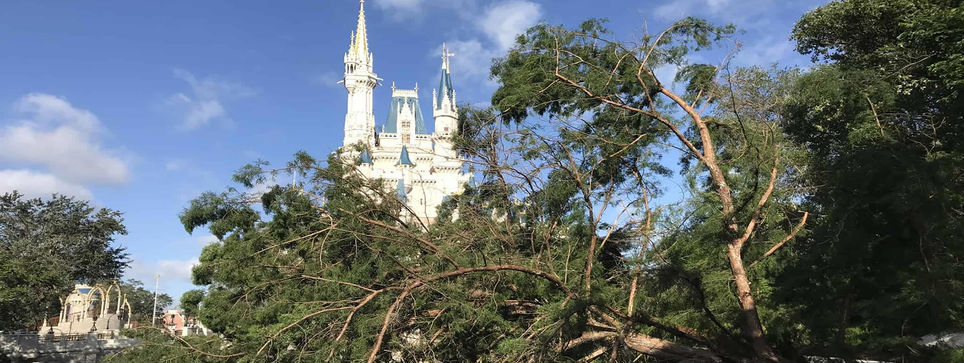 Disney Commercial Tree Removal Tree Trimming Tree Pruning