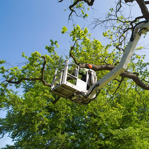 Expert Professional Tree Services