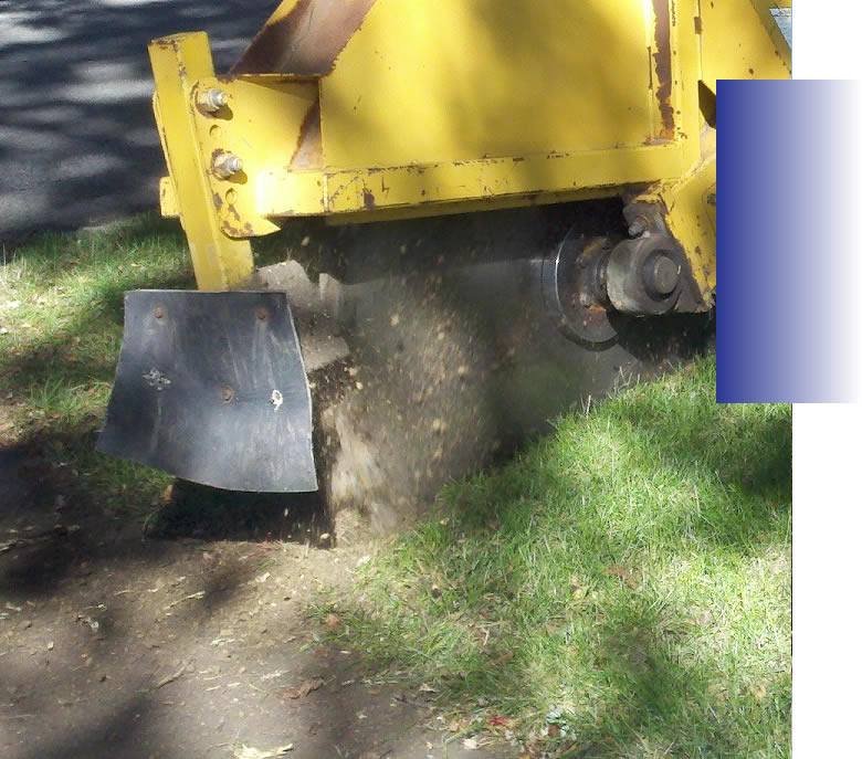 Root Control Root Pruning Florida